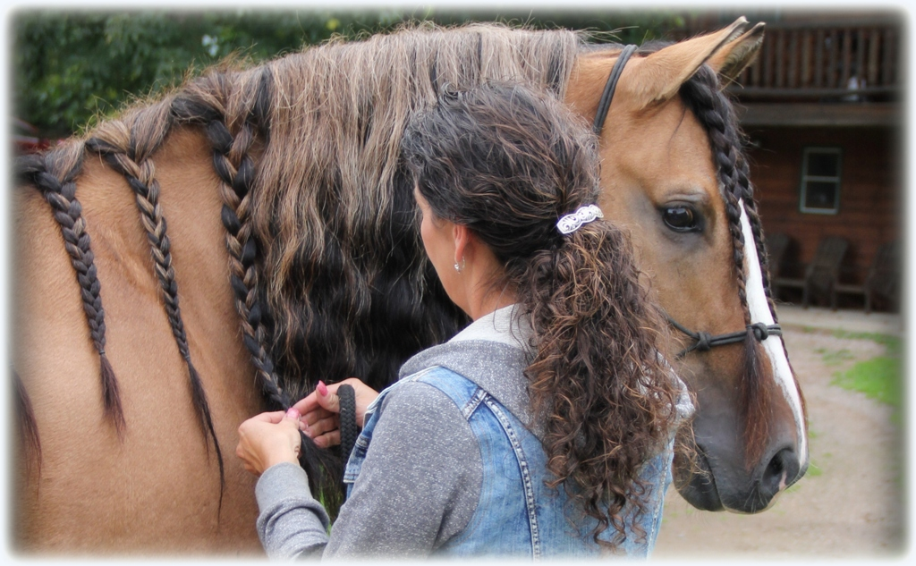 Horse grooming tips03