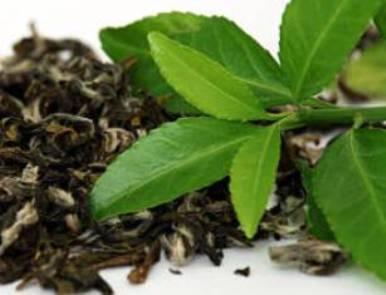 Green Tea1